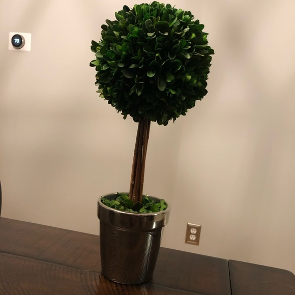 Other - Boxwood topiary!